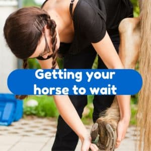 Getting your horse to wait - Eclectic Horseman
