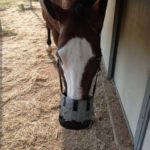 Padded Best Friend Grazing Muzzle