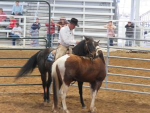 Six Lessons from a Peter Campbell Colt Starting Clinic