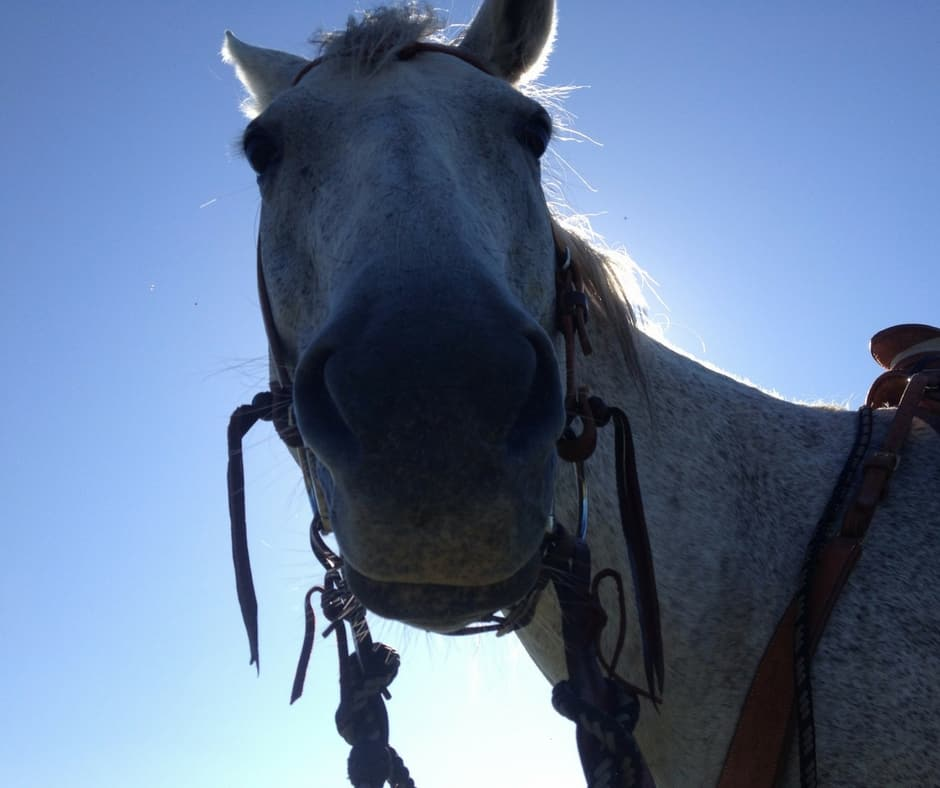 Better Horse Training So This Won't Be Your View of Your Horse