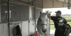 How to Saddle a Horse with Mason