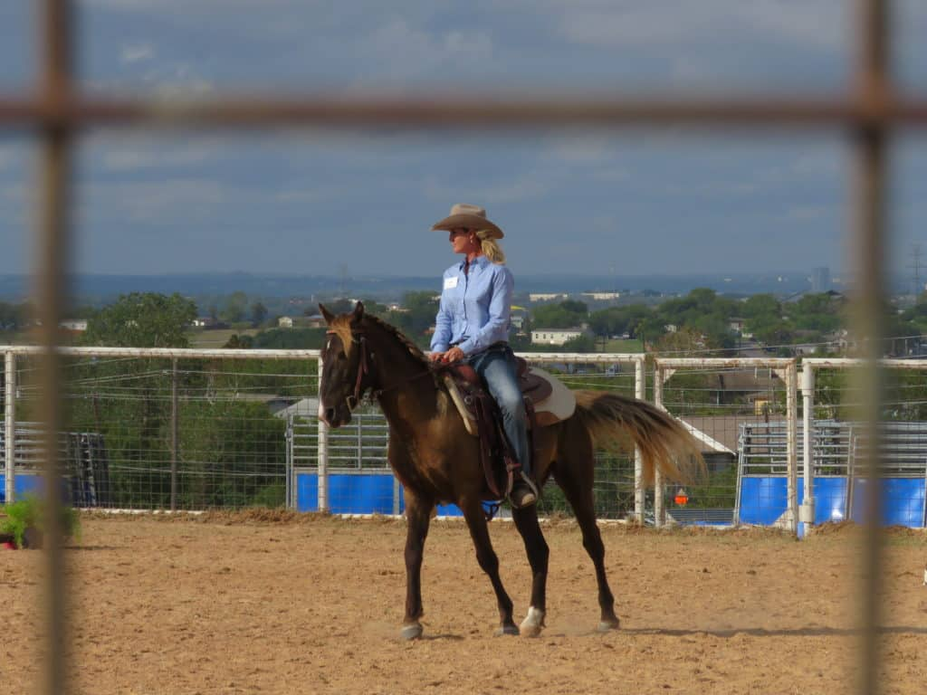 What S Involved In A Successful Horse Training Plan